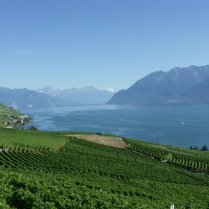 Discover Lavaux Region